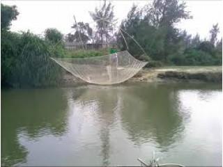 Что такое рыболовный паук